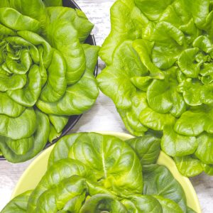 oak green lettuce